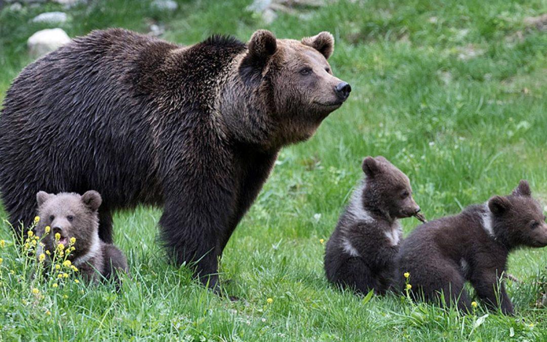 L'homme qui a peur de l'ours