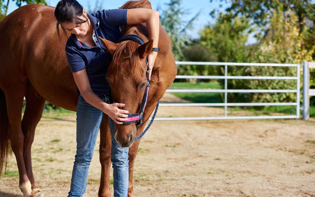 Communiqué de l'Ordre National des Vétérinaires – ostéopathie animale