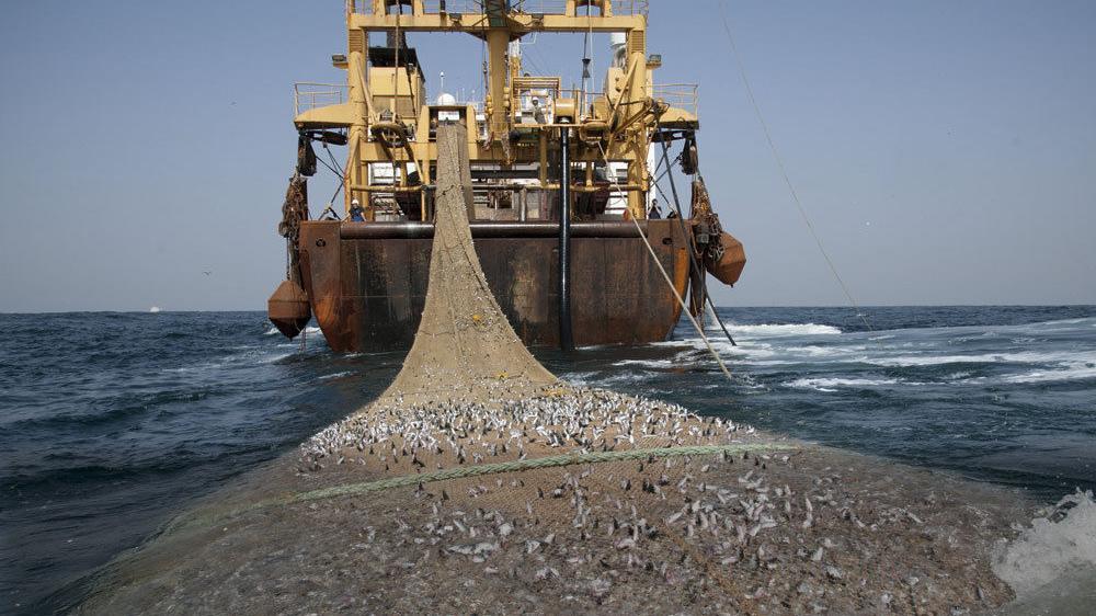Surpêche, un pillage organisé qui provoque des migrations
