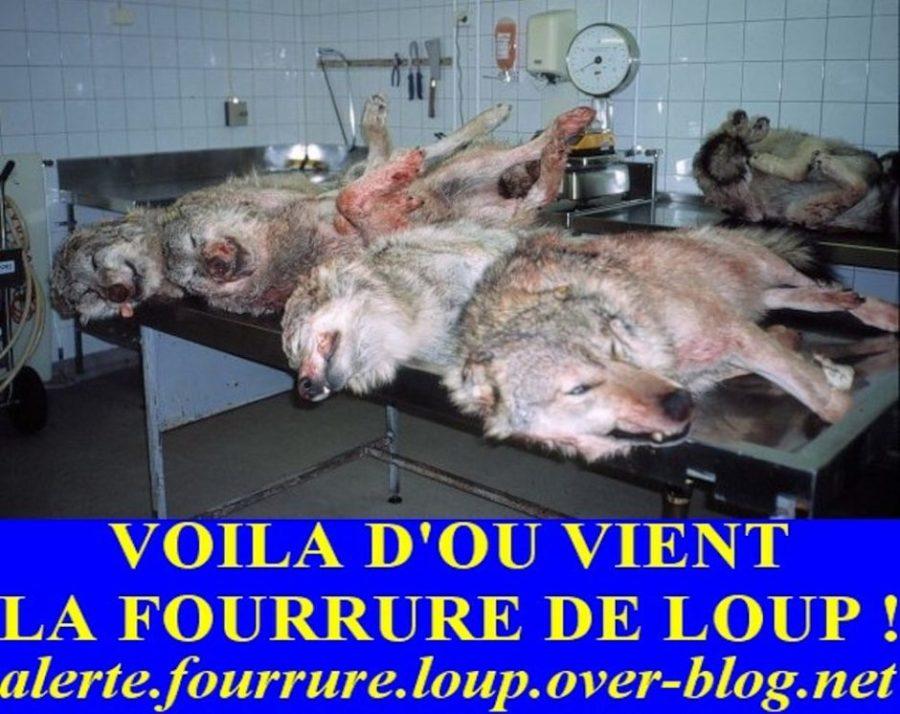 Alerte Fourrure de Loup